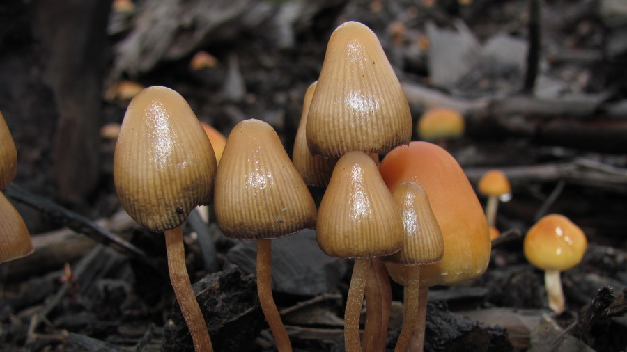 Shroom for improvement: FDA lists psychedelic drugs as 'breakthrough therapy' for depression