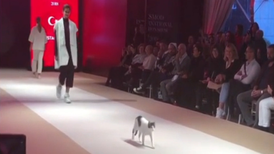'Cat Moss'? Fashionable feline owns the 'catwalk' during Turkish runway show (VIDEO)