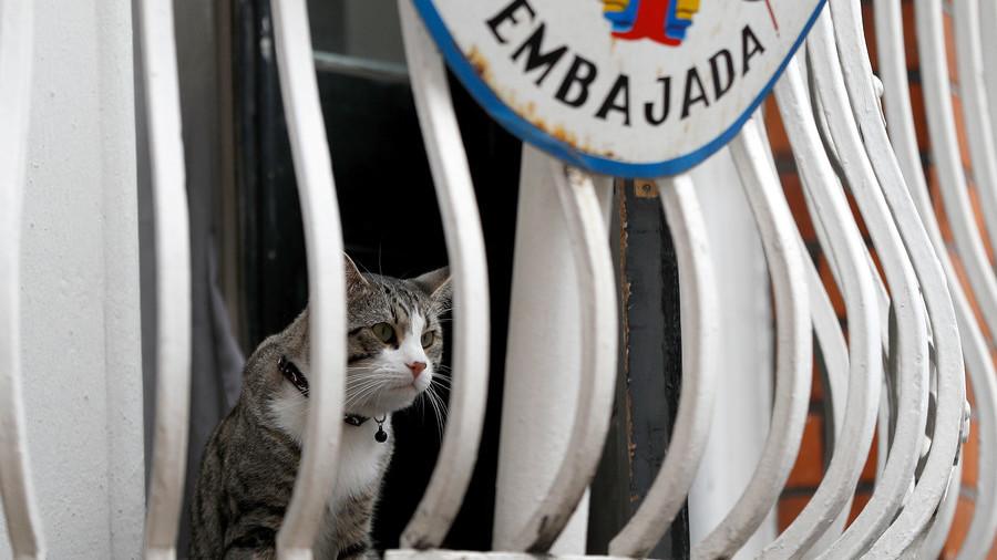 'Assange's asylum restrictions similar to a maximum security jail' – human rights activist