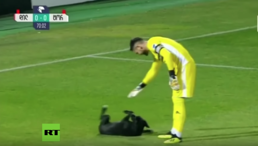 Ruff play: Top tier football match interrupted by dog hunting for belly rubs (VIDEO)