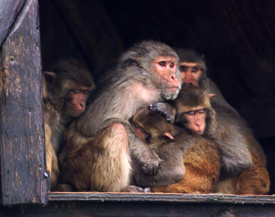 Wildlife official who killed 'whole family of baboons' faces backlash, calls for resignation