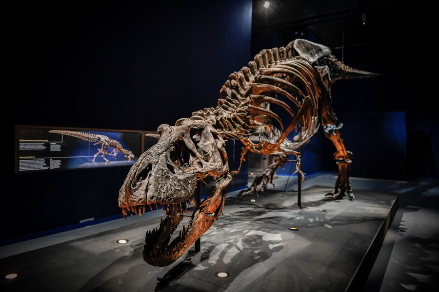 T-rex redesign: The Jurassic meat-eater as you've never seen him before (PHOTOS)