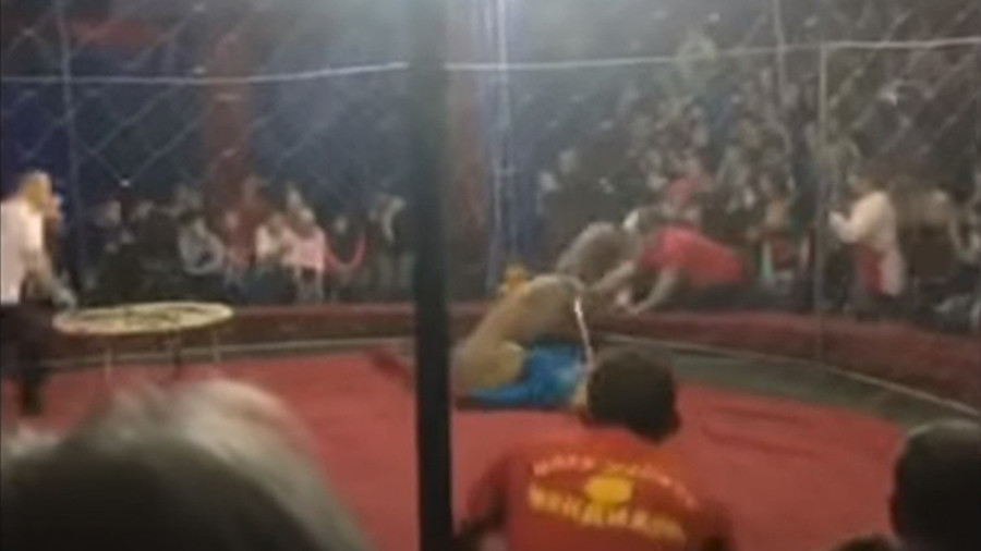 Circus horror: Lioness attacks 4yo girl during show (VIDEO)