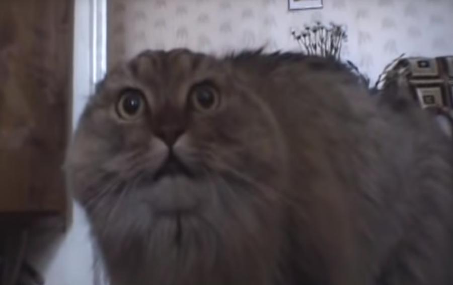 Internet-famous NoNoNoNo Cat dies at 15 (VIDEOS)