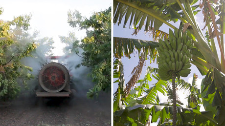 RT COMPOSITION: Pesticide tractor / Banana tree.