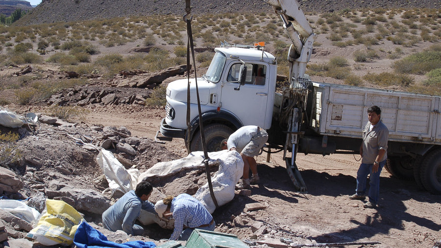 New giant dinosaur species unearthed in Argentina