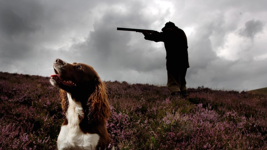Paws for thought: 'Good dog' shoots owner in the chest on way to hunt