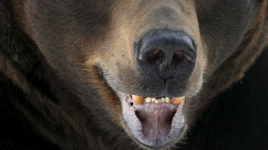 Brave 15yo boy sacrifices himself while saving little cousin from bear in Russia