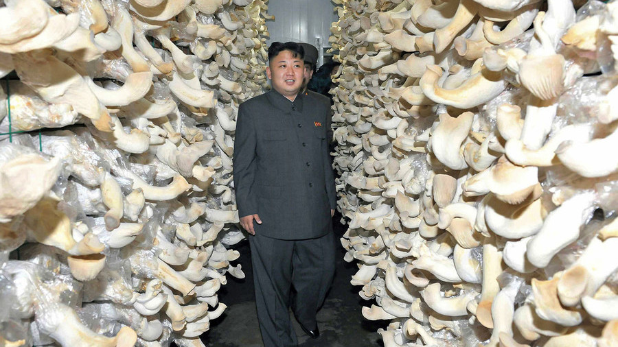 Kim's prized mushrooms safe to eat, Seoul says after radiation test of North Korea gifts