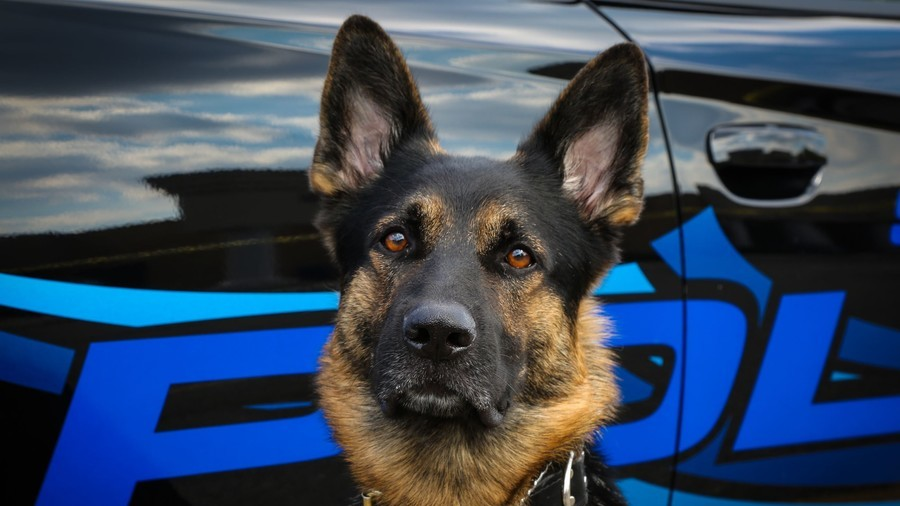 'Rest in paradise': Shot police dog given bagpipe funeral (VIDEO)