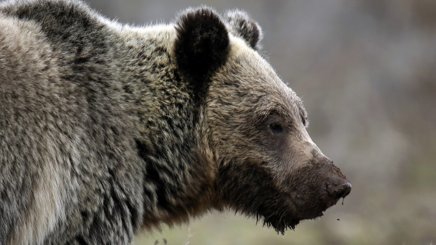 Trapper in Canada finds wife & baby daughter slain by bear he just shot