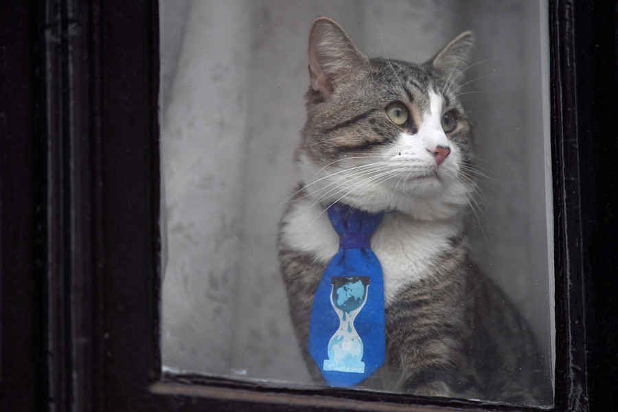 'They will be united in freedom': Assange sends his cat away to safety