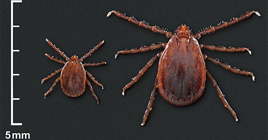 'We're losing this battle': CDC warns of growing infestation of potentially deadly tick across US