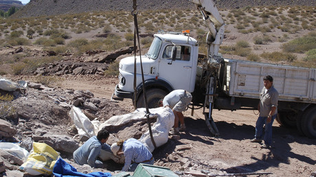 5bde5df4fc7e934f588b45ce New giant dinosaur species unearthed in Argentina