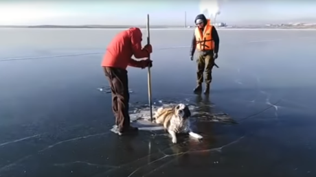 Helpless dog saved from horrible death after getting stuck in middle of frozen Siberian lake (VIDEO)