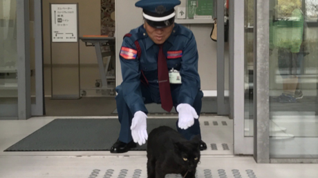 Purr-severance: Cats went viral trying to gain entry to museum for 2 years (VIDEOS)