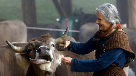 'The dignity of livestock': Swiss going to the polls over divisive cow-horn debate