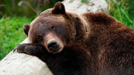 Bear market already here, brace for 20% stock plunge – Ned Davis Research