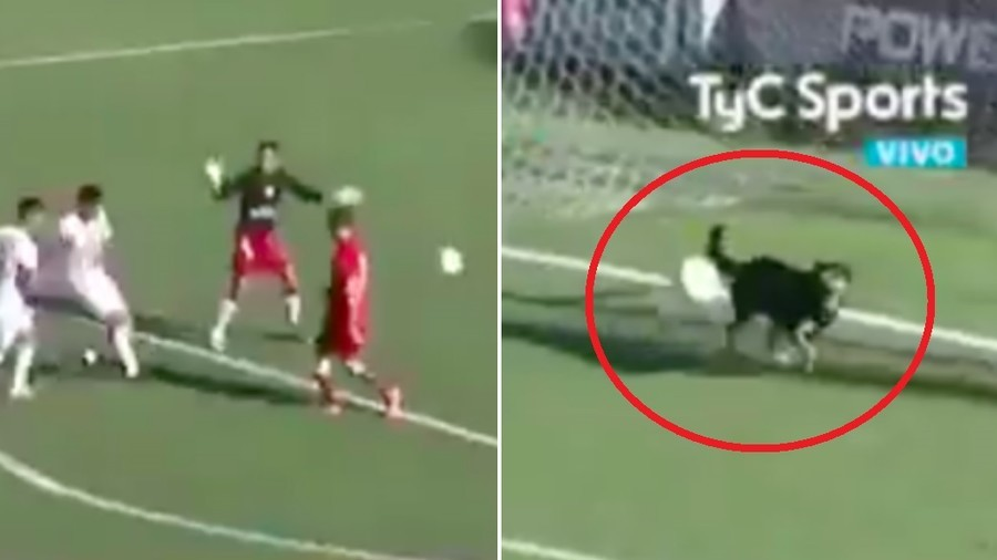 Dog performs wonderful goal line save during soccer match