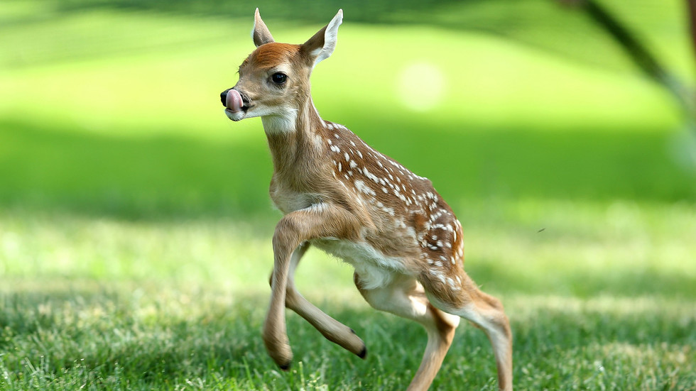 Poacher ordered to repeatedly watch movie 'Bambi'