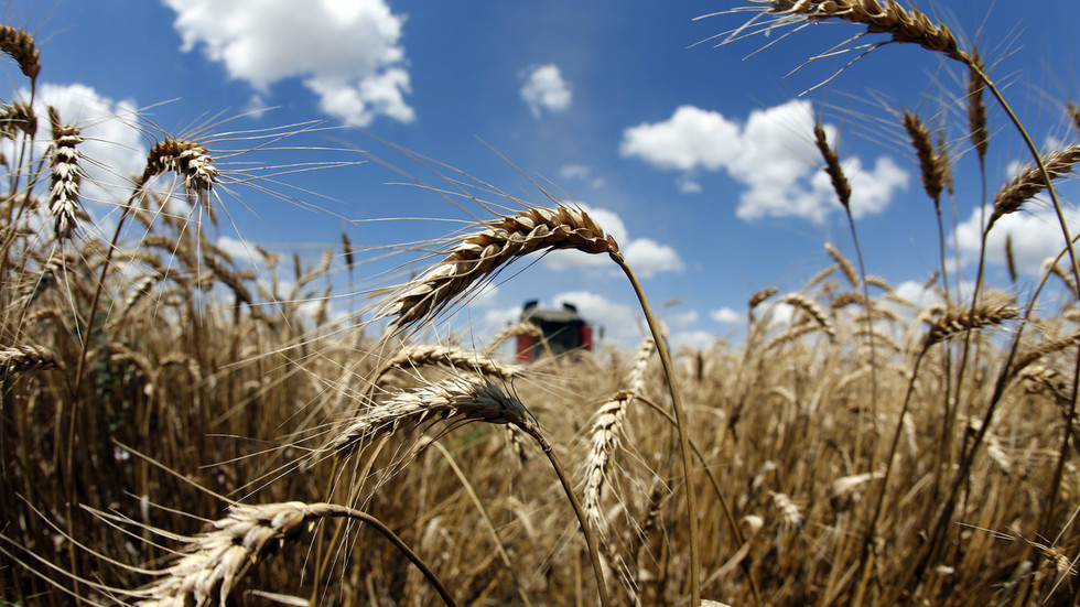 Russia's agricultural exports to hit $25 billion this year