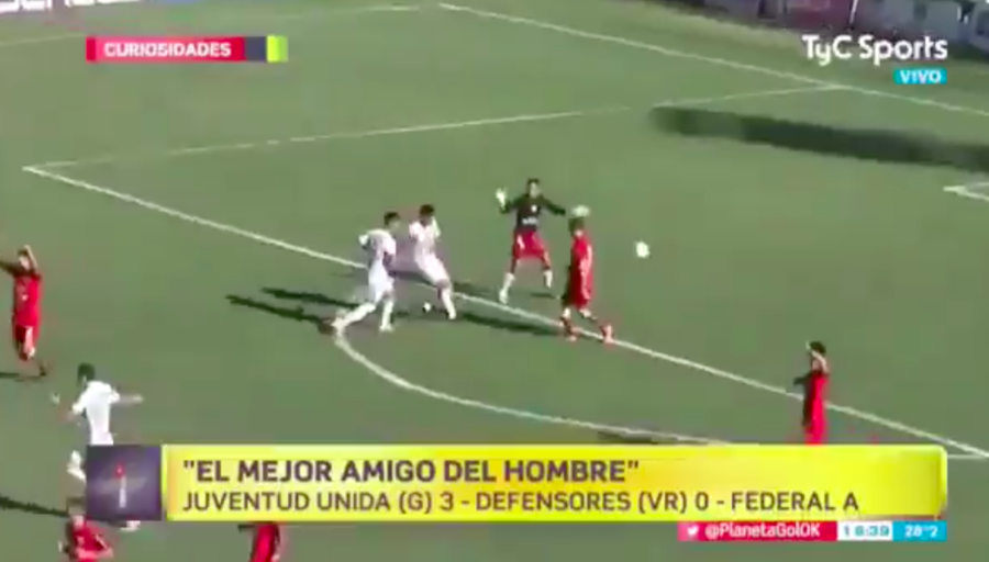 Dog makes incredible save during football match in Argentina