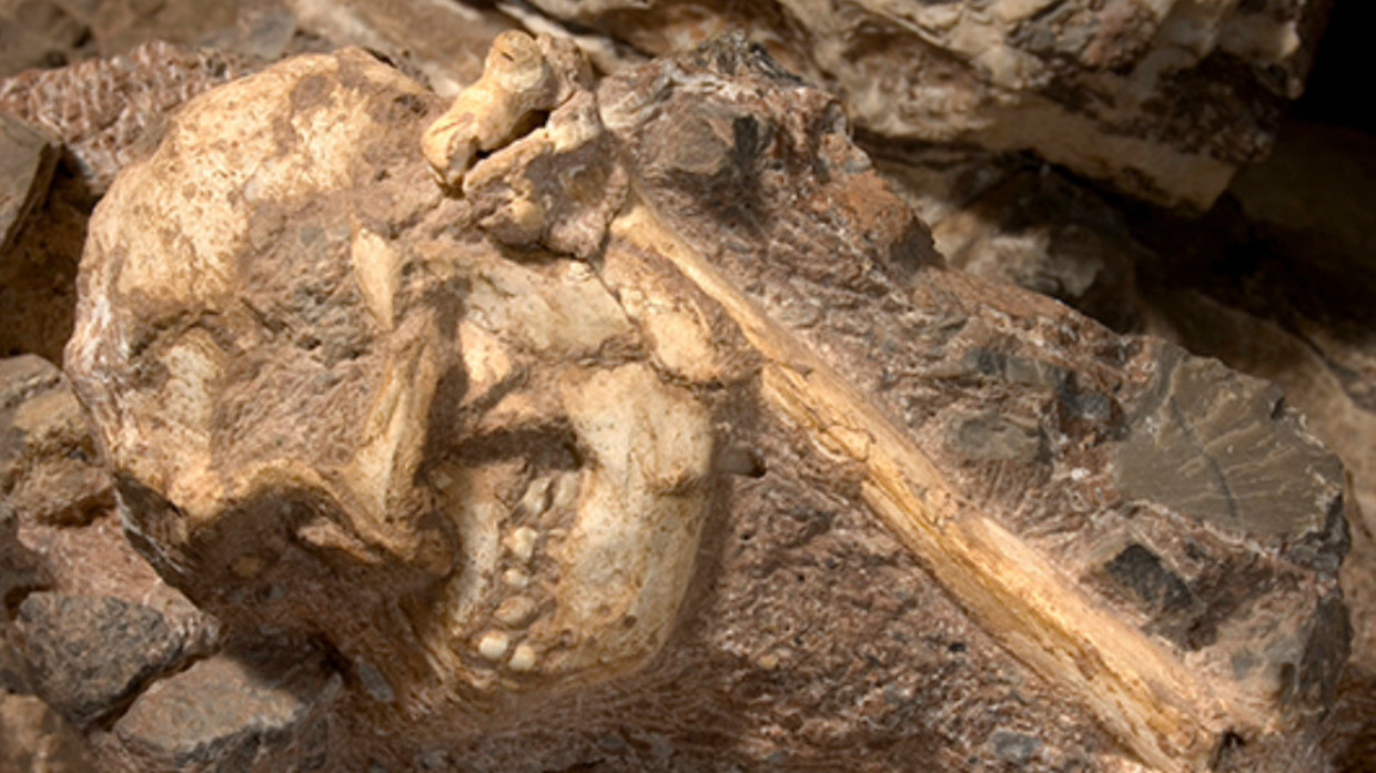 Little Foot mystery solved? Scientists may have confirmed