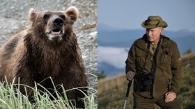 'Bears here, bears there': Putin says he almost got SURROUNDED in Russian wilderness