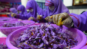 Red gold: Afghanistan's booming & blooming saffron may become alternative to opium poppy trade