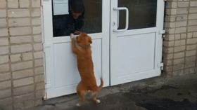 Russian Hachiko: Loyal pooch spends weeks outside hospital awaiting master's recovery (VIDEO)