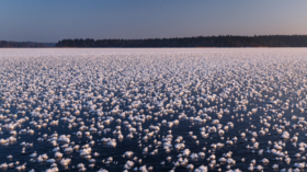 Winter wonderland: Thousands of rare 'ice flowers' bloom on Russian lake (PHOTOS)