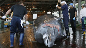 Japan to resume commercial whaling in 2019, defying decades-old intl moratorium
