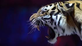 New Russian law forbids killing & mistreating animals, restricts petting zoos & illegal circuses
