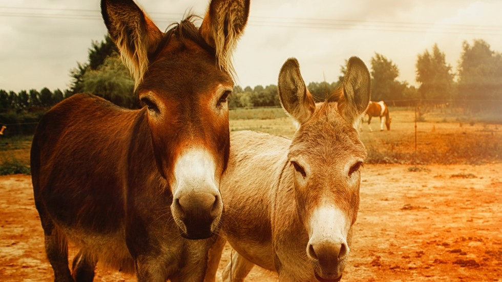 Pakistan wants to cash in on donkey exports to China