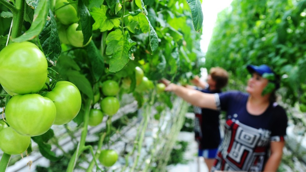 Putin orders Russian brand of 'green' non-GMO produce to be set up