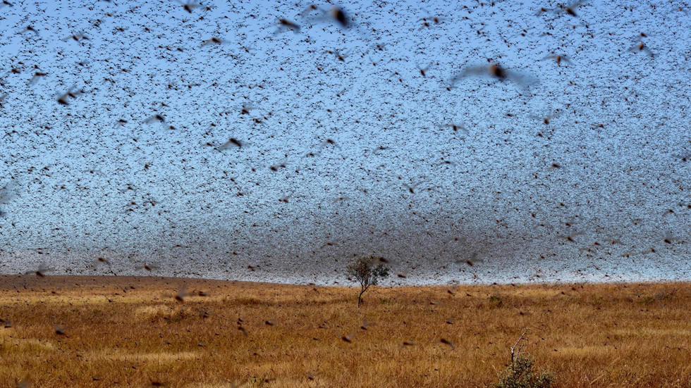Biblical prophecy? Red Sea countries braced for plague of locusts