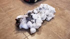 Miraculous revival of polar vortex frozen cat sparks outpouring of joy (PHOTOS)