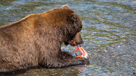 Want to 'destroy' your ex? Sanctuary will name fish after former lover & feed it to a bear