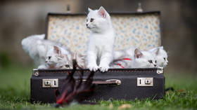 No more cat 'manicures': Animal activists demand ban on declawing in Russia