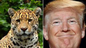 'Magnificent!': Trump's jaguar appreciation tweet gets trolled over sons' hunting hobby