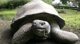 Giant tortoise feared extinct for over 100 years found on Galapagos Islands (PHOTOS)