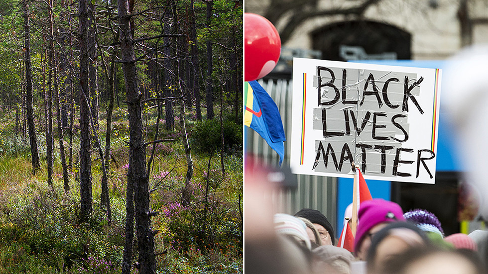 Racist forest? Sweden sparks PC debate over plans to take 'N-word' out of woodland name