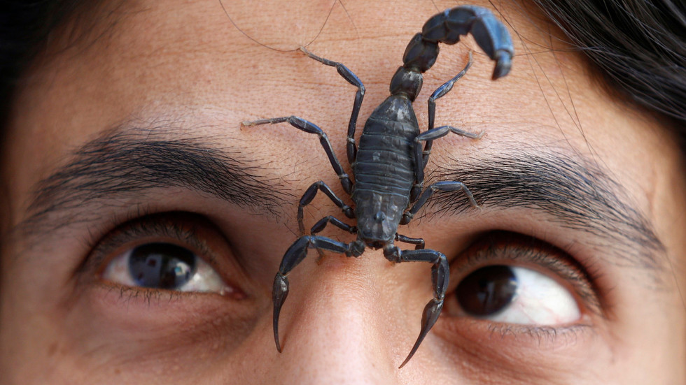 Scorpions on plane! Student STUNG on Canadian flight in arachnophobe horror coming to life