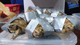 Over 1,500 live turtles found taped-up & stuffed into luggage at Philippines airport (PHOTOS)