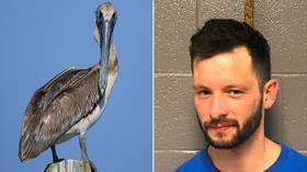 Karma! Man tackles protected pelican in viral video before being tracked down across state lines
