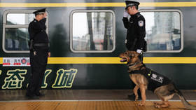 China clones 'Sherlock Holmes of police dogs' to cut time and cost of K9 training