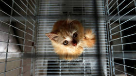 Kitten cannibalism: USDA roasted over 'unjustifiable' experiments on animals