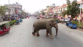 Big trouble in little China: Elephant's stroll through city streets captured in crazy drone VIDEO