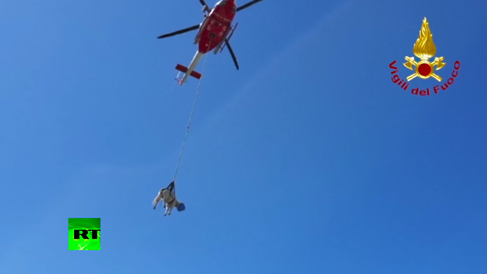 Bo-vine intervention: Sardinian helicopter rescue team saves stranded cow