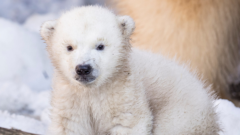 'I pity the bears': Putin calls on Arctic developers to respect climate and wildlife